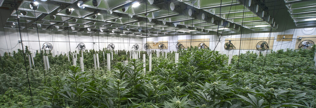 flooring contractor for cannabis facility