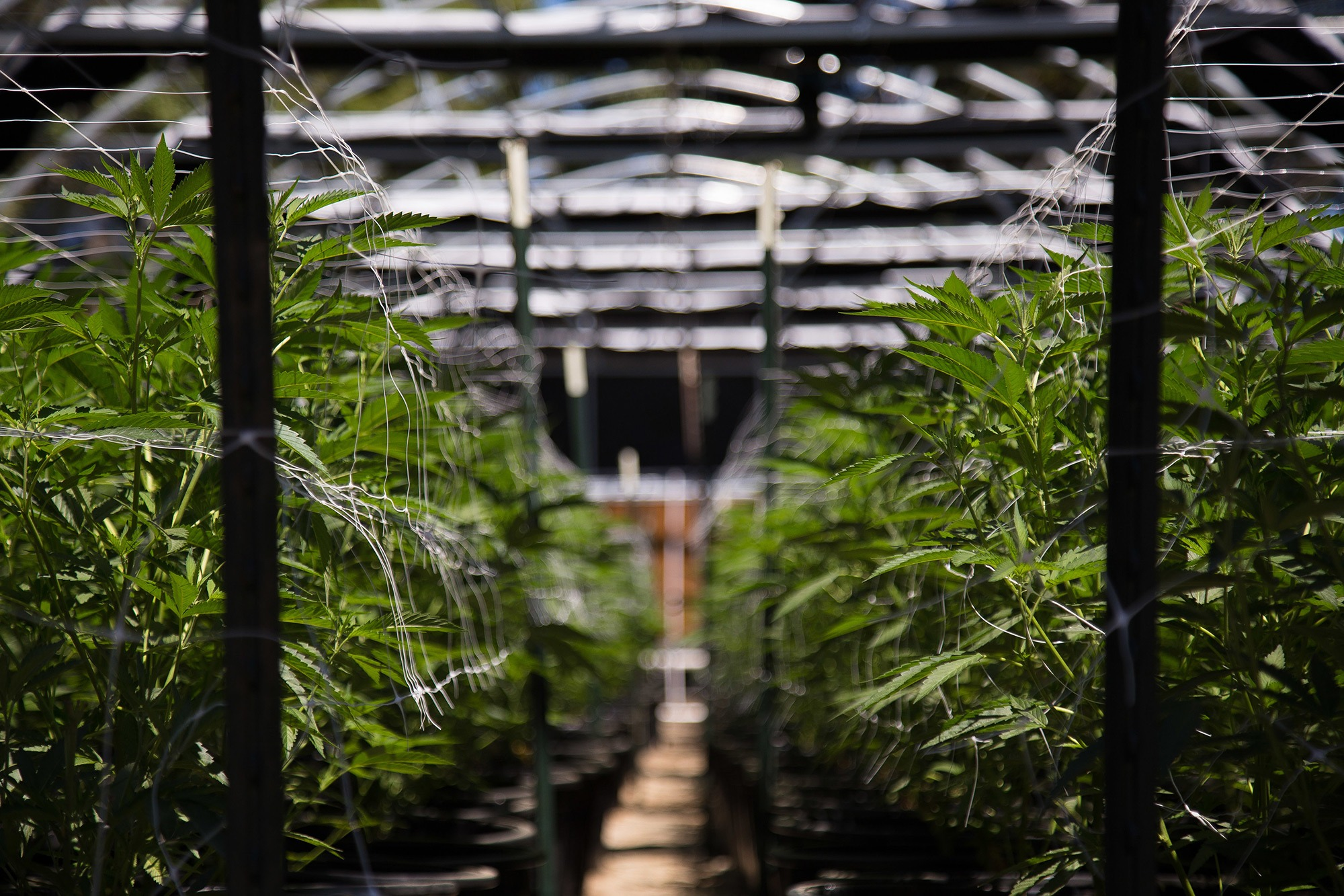 Cannabis cultivation flooring solutions