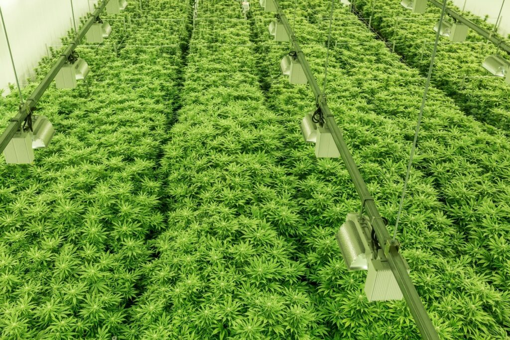 epoxy flooring contractor for cannabis growers