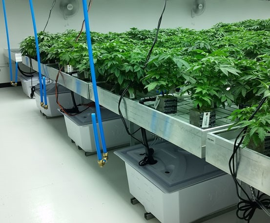 flooring systems for cannabis growing operations
